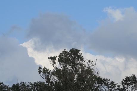 お天気が悪いと、青空が恋しくなります、、、ね_e0292172_07564683.jpeg