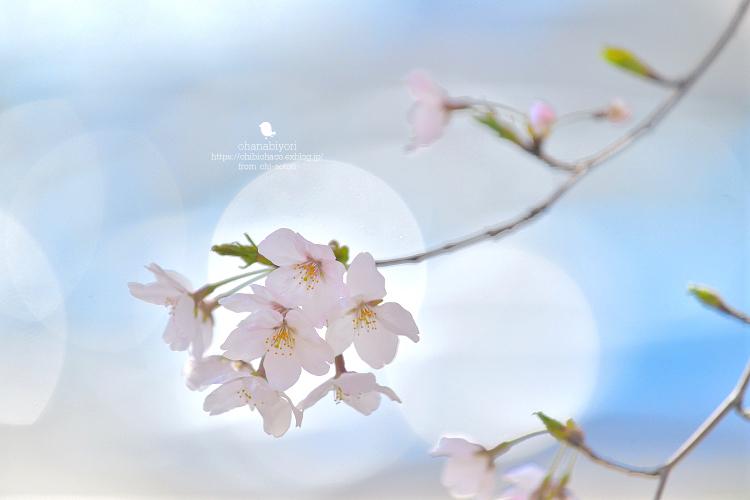 四月ばか_c0319774_20535369.jpg