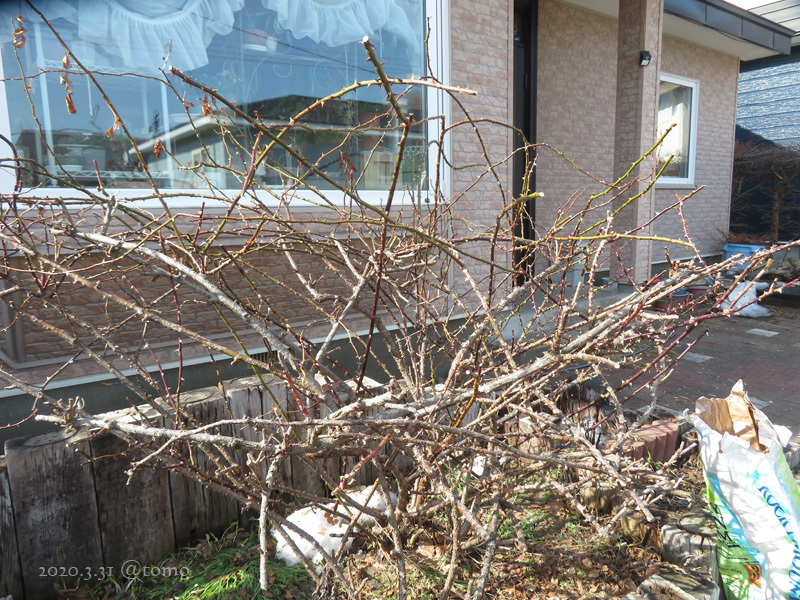 3月最終日、春花壇の準備_f0067179_23004841.jpg