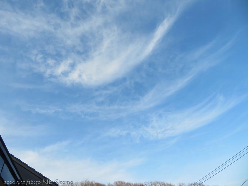 3月最終日、春花壇の準備_f0067179_23020393.jpg
