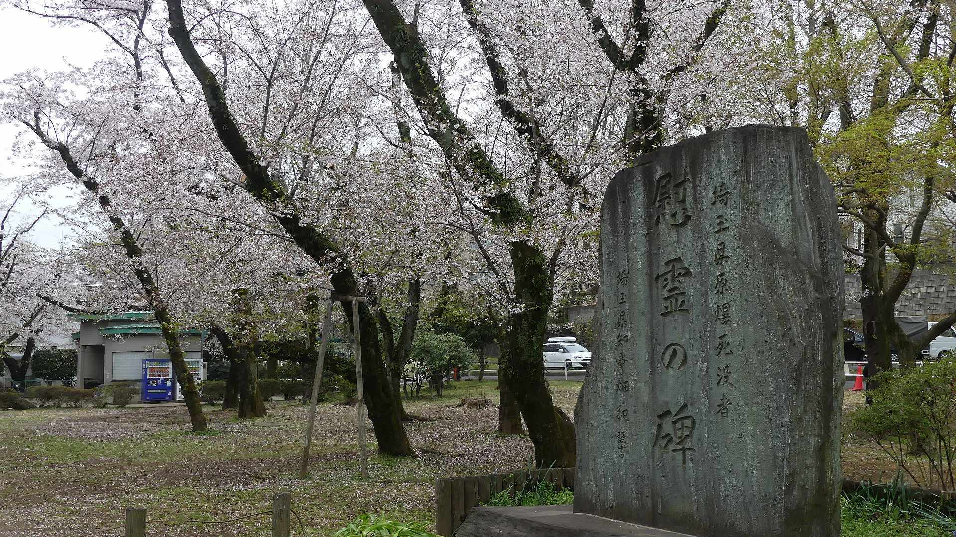 名残の桜_a0185081_14142784.jpg