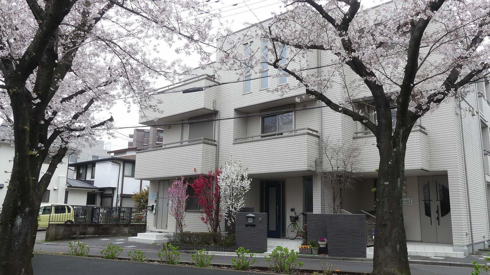 名残の桜_a0185081_14211513.jpg