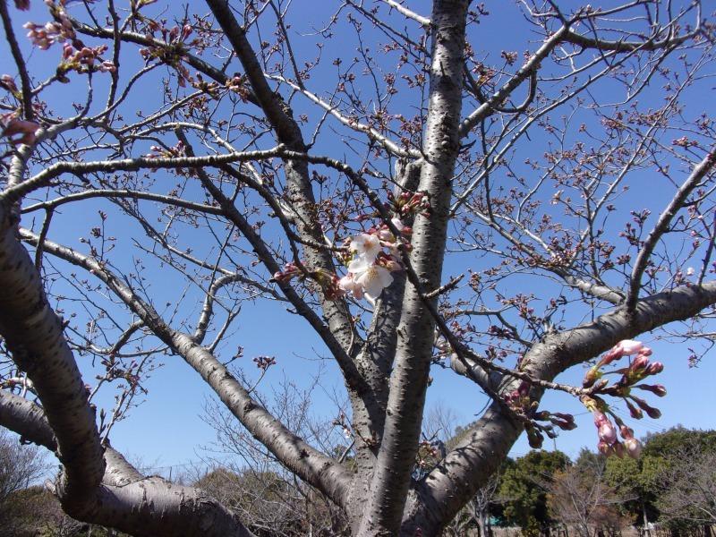 富浜緑地・中川口緑地 お花見シーズン_d0338682_16060541.jpg