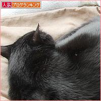 猫だんご問題_a0389088_07092350.jpg