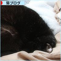 猫だんご問題_a0389088_07092399.jpg