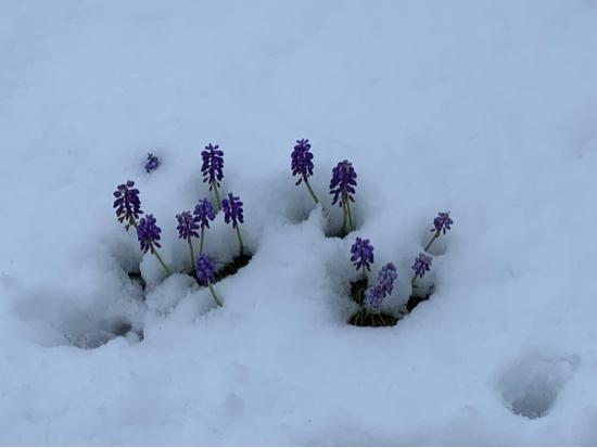 雪にも負けず_d0122088_20384255.jpg