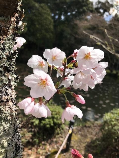 大原野神社_f0204295_13263751.jpg