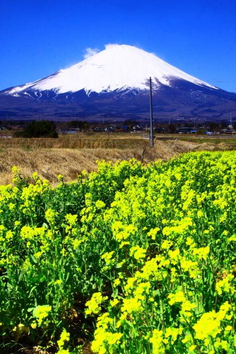 令和2年3月の富士 (24) 御殿場の菜の花と富士_e0344396_17343521.jpg