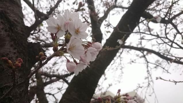 ひとりで花見_a0113003_16161294.jpg
