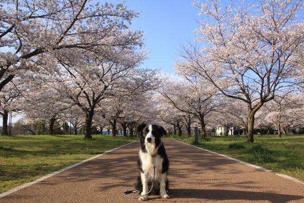 お花見散歩_d0224111_12401565.jpg
