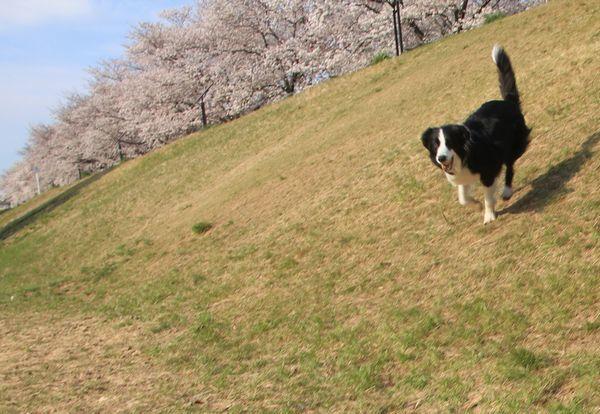 お花見散歩_d0224111_12434408.jpg