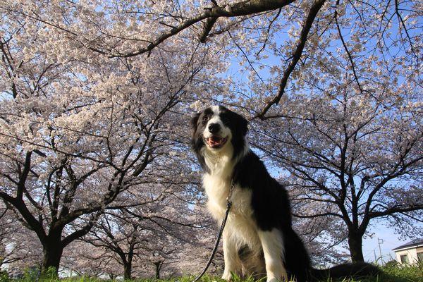 お花見散歩_d0224111_12442334.jpg
