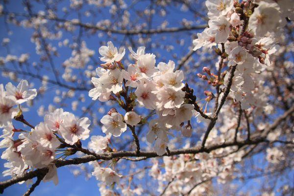 お花見散歩_d0224111_12462844.jpg