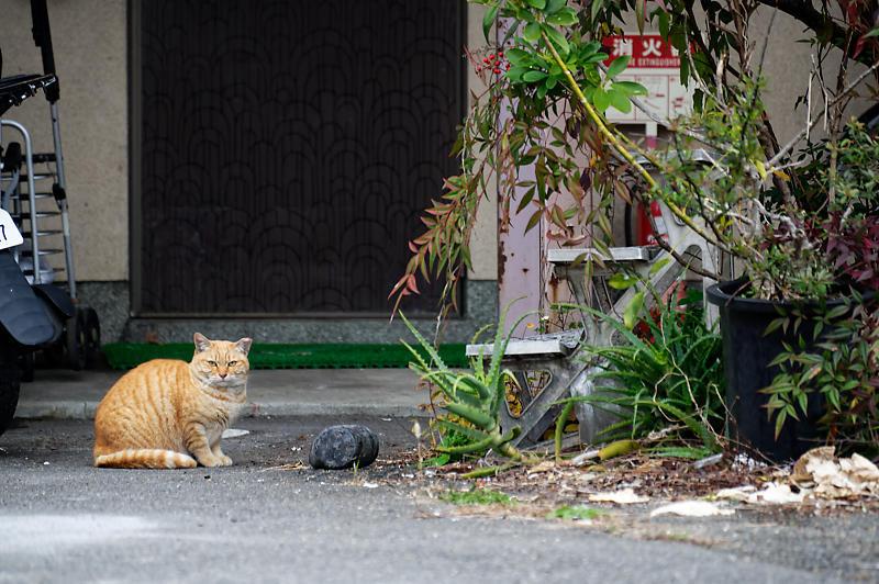 町角ニャンコ・あちこちニャンコ_f0032011_20115115.jpg