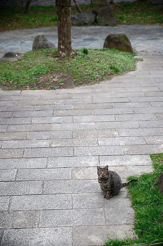 町角ニャンコ・あちこちニャンコ_f0032011_20115169.jpg