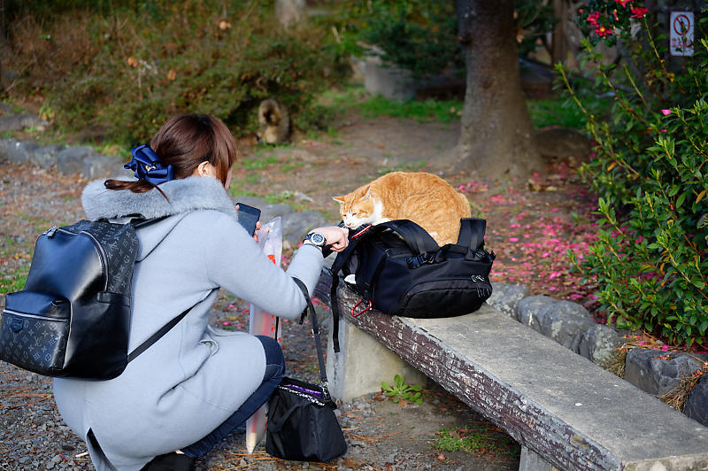 町角ニャンコ・あちこちニャンコ_f0032011_20115246.jpg