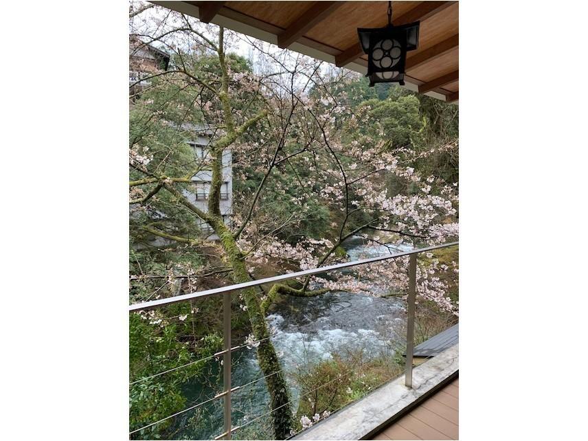 桜3分咲き_c0210517_09281139.jpg
