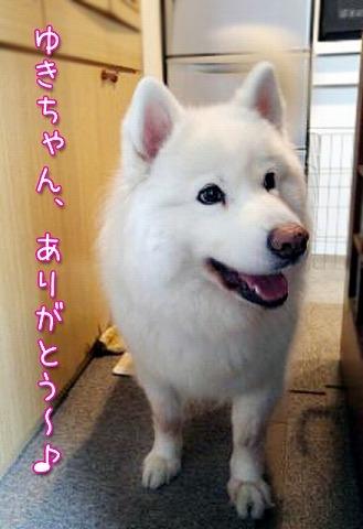 ありがたき_c0062832_16060786.jpg