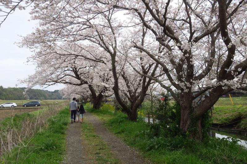 今井の桜2020_f0126932_20512319.jpg
