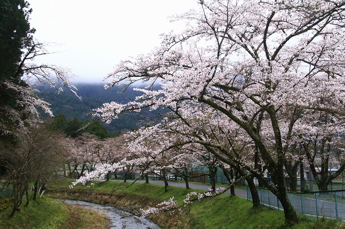 徳山の枝垂れ桜_f0327034_15504651.jpg