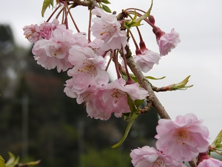 4月1日、新年度始まりました。_a0123836_15365631.jpg