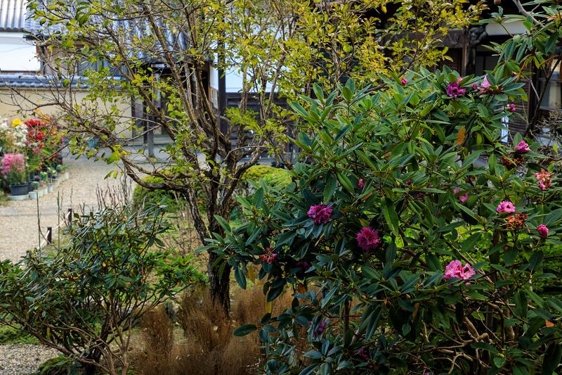 紅葉が彩る奈良2019 西南院の秋_f0155048_2301216.jpg