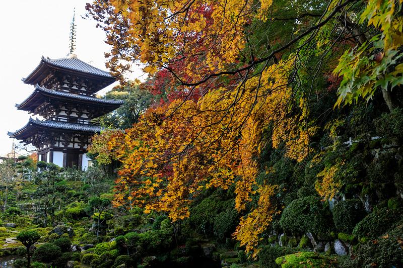 紅葉が彩る奈良2019 西南院の秋_f0155048_2302395.jpg