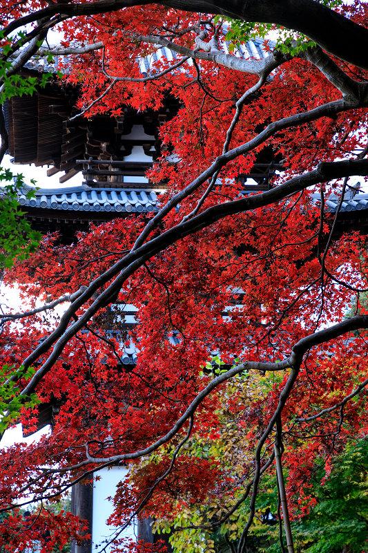 紅葉が彩る奈良2019 西南院の秋_f0155048_2314793.jpg
