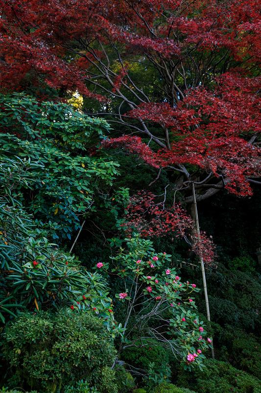 紅葉が彩る奈良2019 西南院の秋_f0155048_2322887.jpg