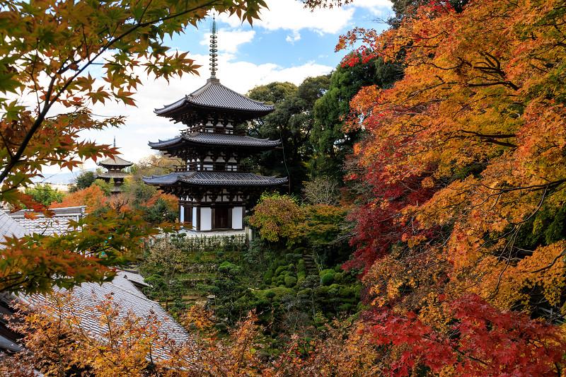 紅葉が彩る奈良2019 西南院の秋_f0155048_2334483.jpg