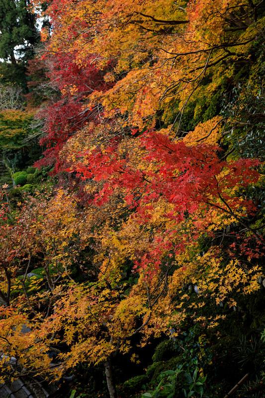紅葉が彩る奈良2019 西南院の秋_f0155048_2342518.jpg