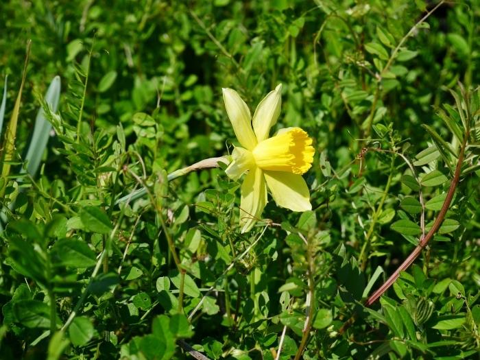 春の花咲く里山をゆく 終  2020-04-03 00:00   _b0093754_22044450.jpg