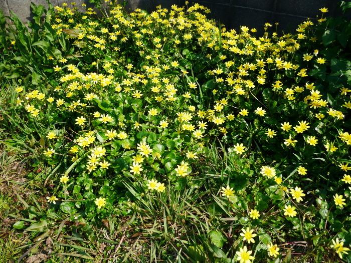 春の花咲く里山をゆく 終  2020-04-03 00:00   _b0093754_22054156.jpg