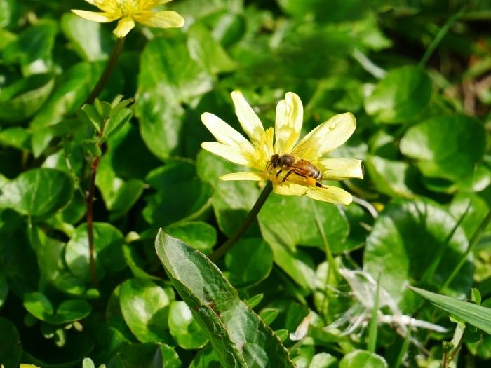 春の花咲く里山をゆく 終  2020-04-03 00:00   _b0093754_22055442.jpg