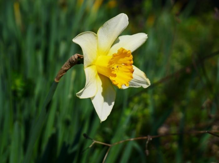 春の花咲く里山をゆく 終  2020-04-03 00:00   _b0093754_22062483.jpg