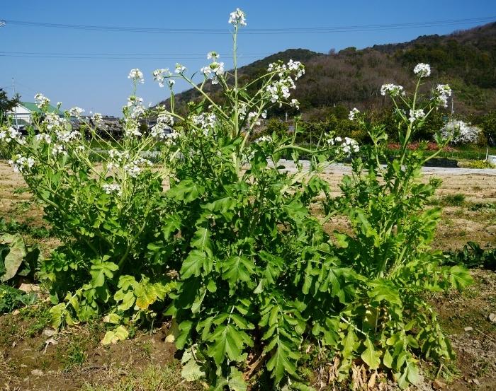 春の花咲く里山をゆく 終  2020-04-03 00:00   _b0093754_22264233.jpg
