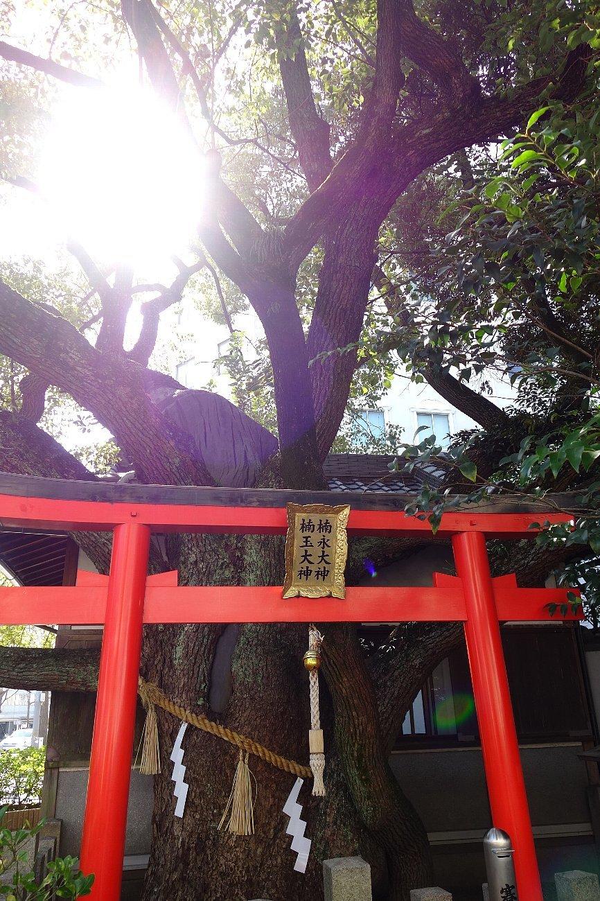 靭(うつぼ)公園 西園_c0112559_07573900.jpg