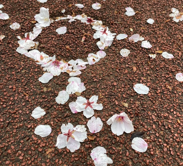 Sakura    書道の課題を送りに・・・_a0165160_11341302.jpg