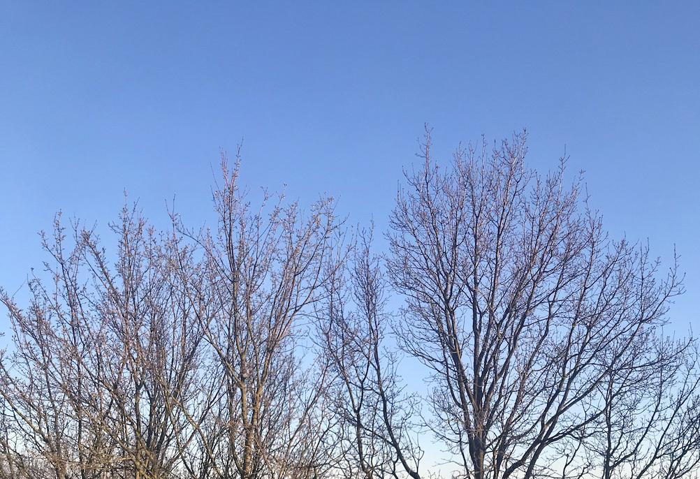 飛行機雲のないドイツの空_c0192161_04392299.jpg