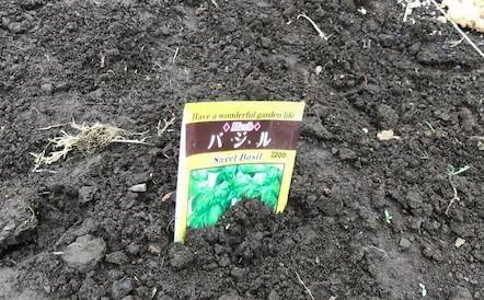 インゲン、オクラ、カボチャ、バジルの種蒔き3・31_c0014967_09185597.jpg