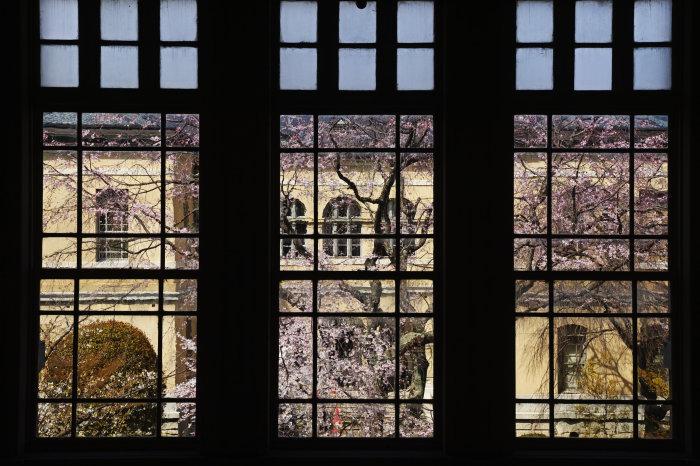 桜 2020_f0021869_00233072.jpg