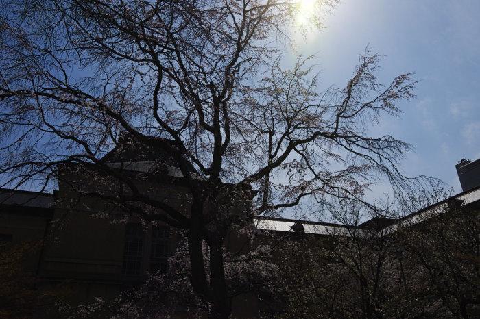桜 2020_f0021869_00233112.jpg