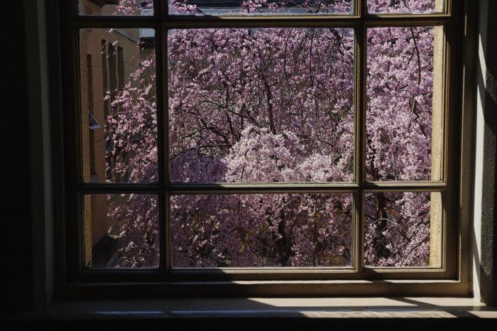 桜 2020_f0021869_00273675.jpg