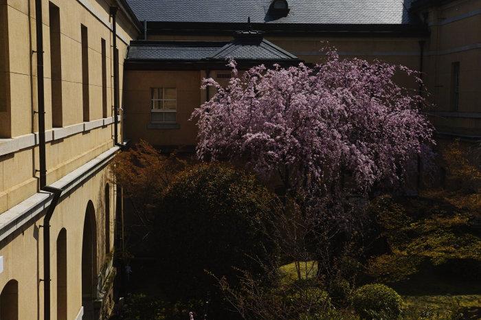 桜 2020_f0021869_00273828.jpg