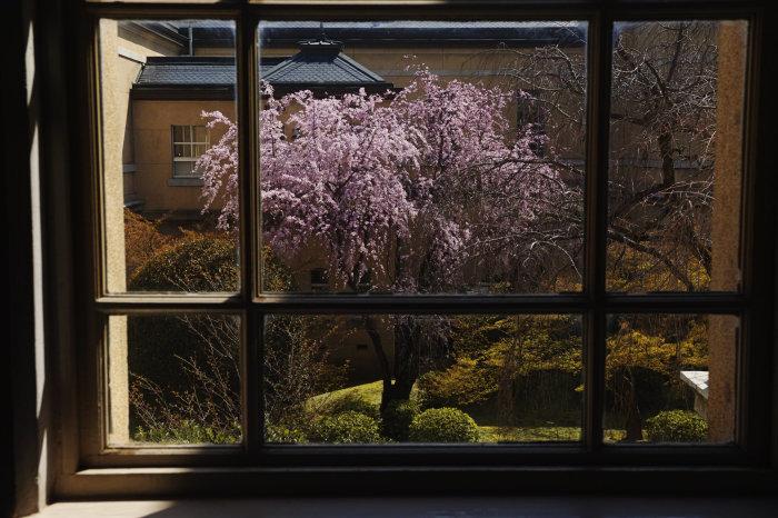 桜 2020_f0021869_00334965.jpg