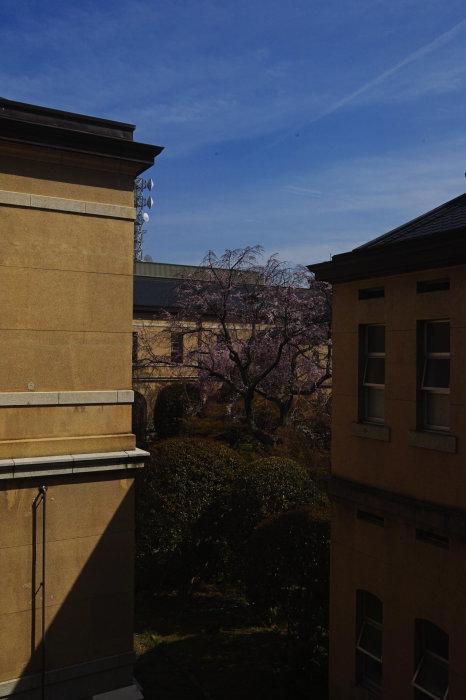 桜 2020_f0021869_00335085.jpg