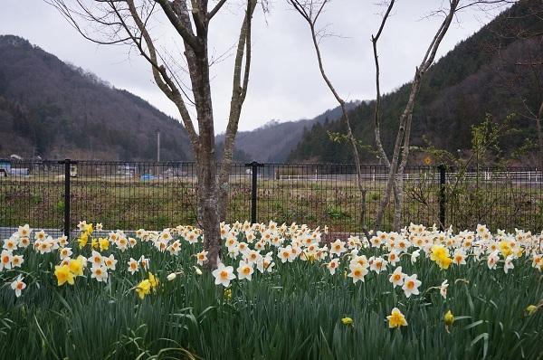 今日のお庭_e0365880_00063915.jpg