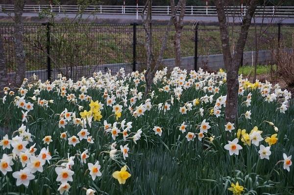 今日のお庭_e0365880_00074901.jpg