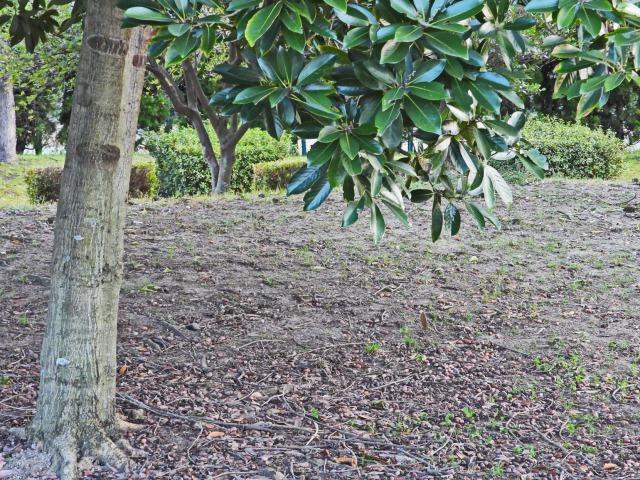 富浜緑地で見られる植物♪_d0338682_16432044.jpg