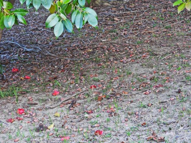 富浜緑地で見られる植物♪_d0338682_16433463.jpg